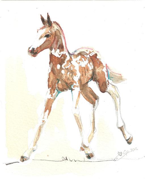 Aquarel schilderij van paard Veulen Pinto