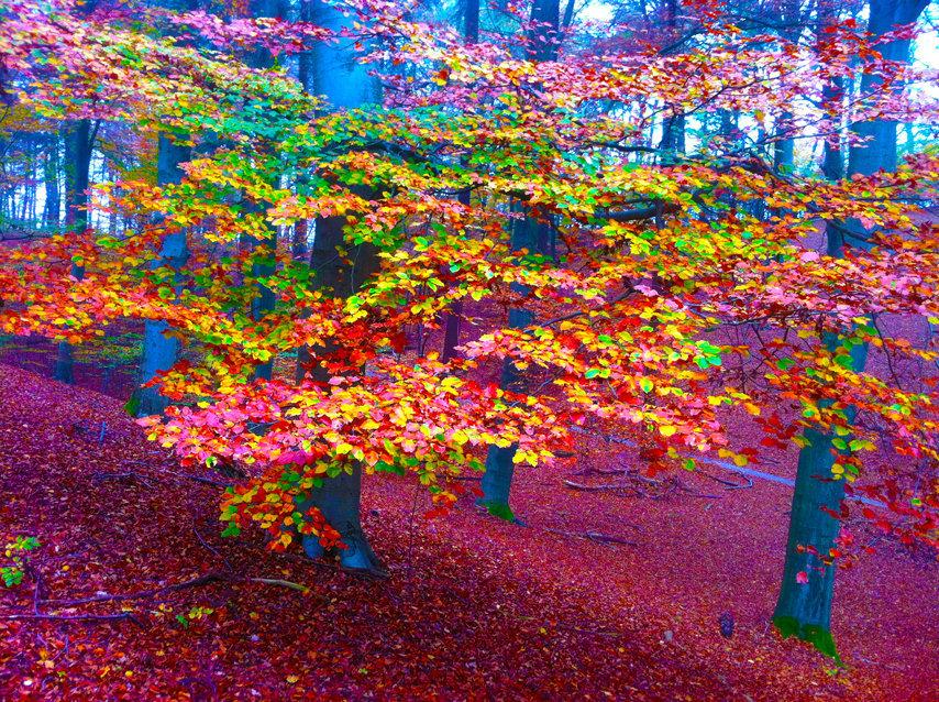 Digitaal schilderij van zee Gekleurde Bladeren