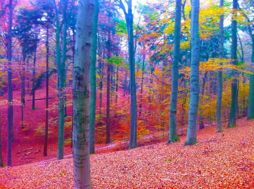 Digitaal schilderij van een bos landschap
