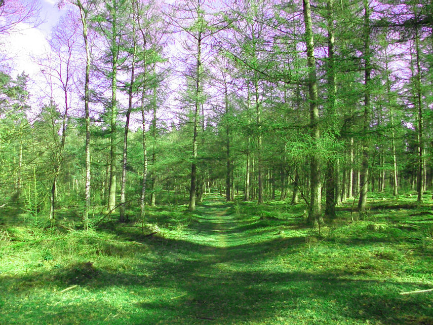 Digital painting of forest Lets Walk This Way
