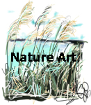 Nature Art Gallery by Go van Kampen